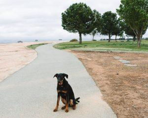 Panorama-Park-Loop-Trail-Bakersfield-California
