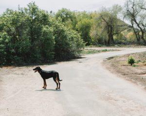 Panorama-Vista-Preserve-Trail