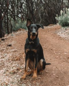 Sonora-dog-friendly-hike-Dragoon-Gulch