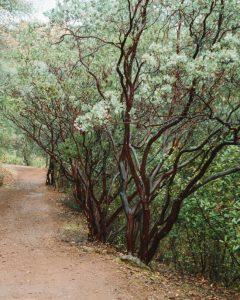 dragoon-gulch-trail-california
