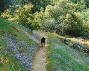 Hiking-Mill-Creek-Trail-In-California