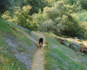 Hiking-Mill-Creek-Trailhead-California