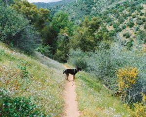 Mill-Creek-Kern-Canyon-Trail-Bakersfield-California