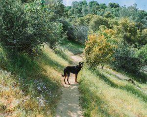 Mill-Creek-Trail-Bakersfield-California