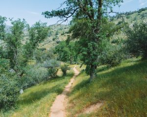 Mill-Creek-Trail-Bakersfield-California-Kern-Canyon