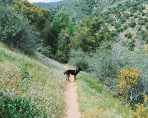 Mill-Creek-Trail-Bakersfield-California-Sequoia-National-Forest-Kern-Canyon