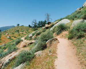 Mill-Creek-Trail-In-Bakersfield-Sequoia-National-Forest
