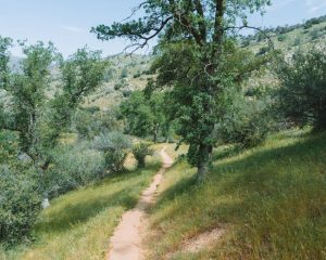 Mill-Creek-Trail-In-Sequoia-National-Forest-Near-Bakersfield