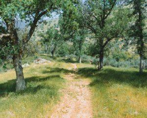Mill-Creek-Trailhead
