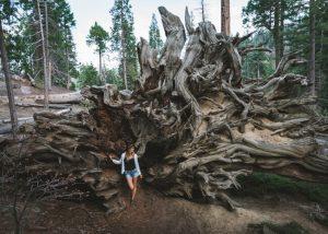 Trail-of-100-giants-fallen-giants-loop
