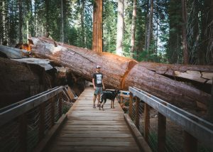 Trail-of-100-giants-sequoia-national-forest-in-california