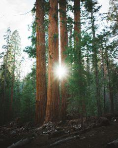 Trail-of-100-giants-trailhead