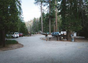 Trail-of-100-giants-trailhead-parking