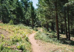 Unal-Trail-Kern-Canyon-Sequoia-National-Forest