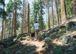 Unal-Trail-Sequoia-National-Forest