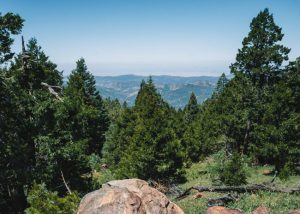 Unal-Trail-Sequoia-National-Forest-California