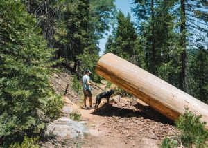 Unal-Trail-Sequoia-National-Forest-Hikes
