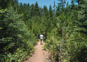 Unal-Trail-Sequoia-National-Forest-Hiking