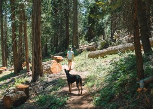 Unal-Trail-Wofford-Heights-Lake-Isabella-Sequoia-National-Forest