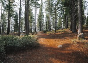 cascade-falls-trail-lake-tahoe