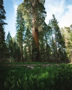 trail-of-100-giants-sequoia-national-forest