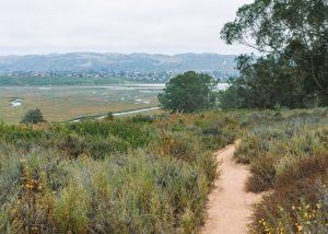 Black-Hill-Trail-Morro-Bay-State-Park-Central-California