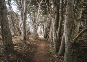 Central-Coast-In-California-San-Simeon-Bay-Trail