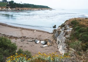 Central-Coast-San-Simeon-Bay-Trail