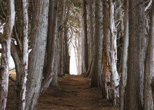 San-Simeon-Bay-Hiking-Trail