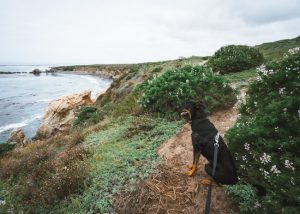 San-Simeon-Bay-Trail-California-Coast