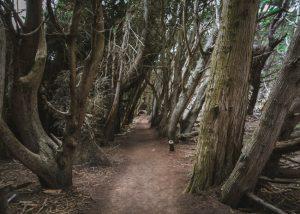 San-Simeon-Bay-Trail-Centra-California-Coast