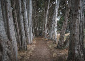 San-Simeon-Bay-Trail-Central-California
