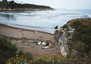 San-Simeon-Bay-Trail-Central-Coast