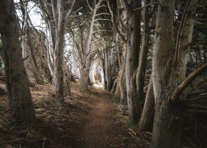 San-Simeon-Bay-Trail-Central-Coast-In-California