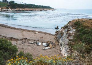 San-Simeon-Bay-Trail-Elephant-Seals