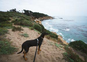 San-Simeon-Bay-Trail-Hearst-San-Simeon-State-Park-California