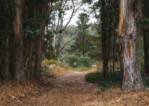 San-Simeon-Point-Trail-San-Simeon-Bay-Trail