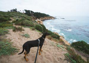 San-Simeon-State-Park-California-San-Simeon-Bay-Trail