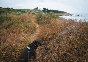 san-simeon-bay-trail-central-coast-hikes