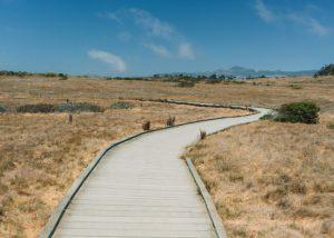 Fiscalini-Ranch-Preserve-In-Cambria-California