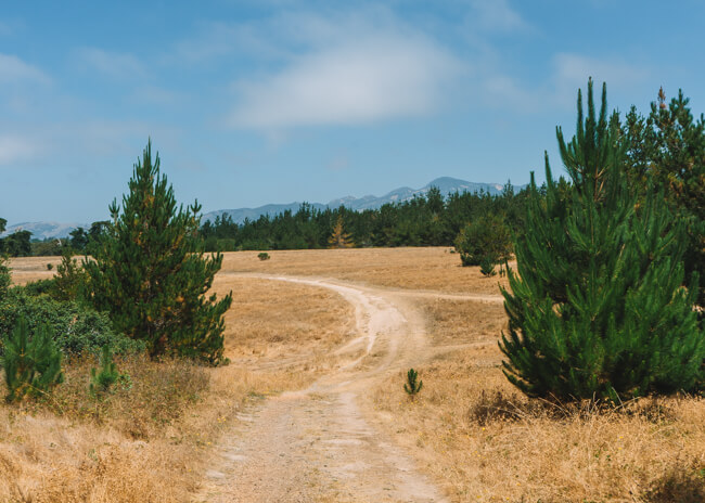 Fiscalini-Ranch-Preserve-Monterey-Pine-Forest | California ...