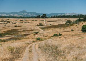 Fiscalini-Ranch-Trails
