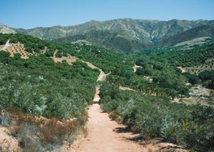 Hiking-Toro-Canyon-Park-Santa-Barbara