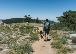 Los-Padres-National-Forest-Mount-Pinos-Hike