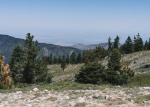 Los-Padres-National-Forest-Mt-Pinos-Viewpoint