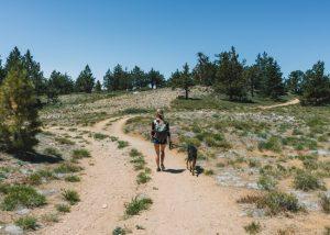 Mt-Pinos-Hiking-Trail