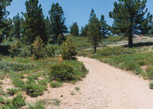 Mt-Pinos-Trail