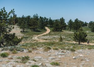Mt-Pinos-Trail-Los-Padres-National-Forest-California