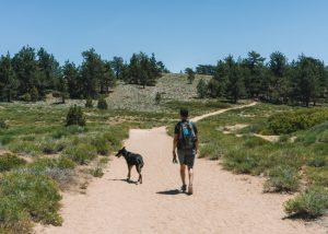 Mt-Pinos-Trail-Los-Padres-National-Park-California