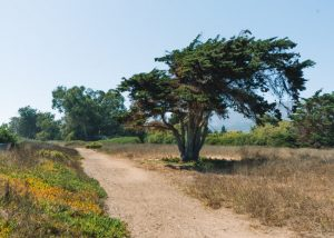 Tar-Pits-Park-Carpinteria-California